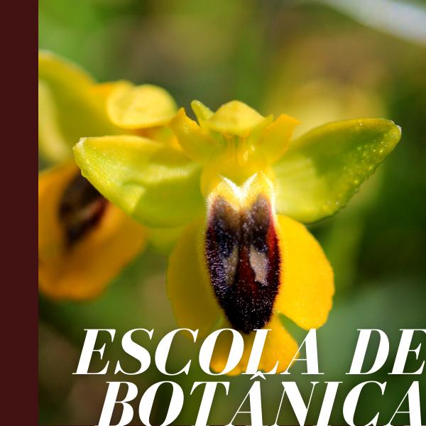 A Morfologia Vegetativa e Reprodutora das Plantas